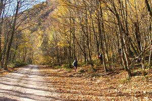 Начало маршрута к плато Черногор ©Фото Заиры Гамидовой, Юга.ру