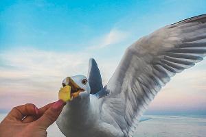 Алушта ©Фото со страницы в инстаграме, www.instagram.com/alushta/