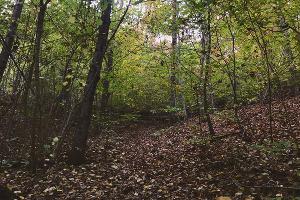 Сложная тропа к Богатырским пещерам. Горячий Ключ ©Фото Заиры Залексон, Юга.ру