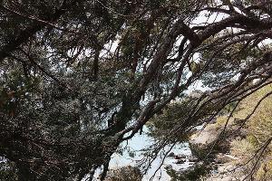 Ялта ©Фото со страницы в инстаграме, www.instagram.com/verachee/