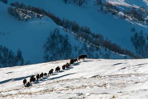 ©Фото с сайта www.kgpbz.ru